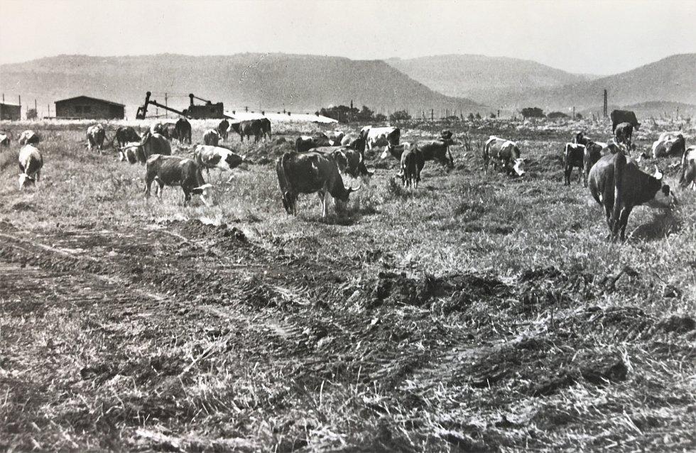 Na počátku byla pastvina pro hovězí dobytek