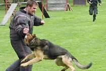Figurant musel odolávat sedmnácti policejním psům.