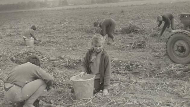 V dalším díle našeho seriálu se vrátíme na Chomutovsko do 80. let. Na podzim se konaly brigády sběru brambor.