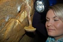 Jedlé houby najdete v jirkovském podzemí