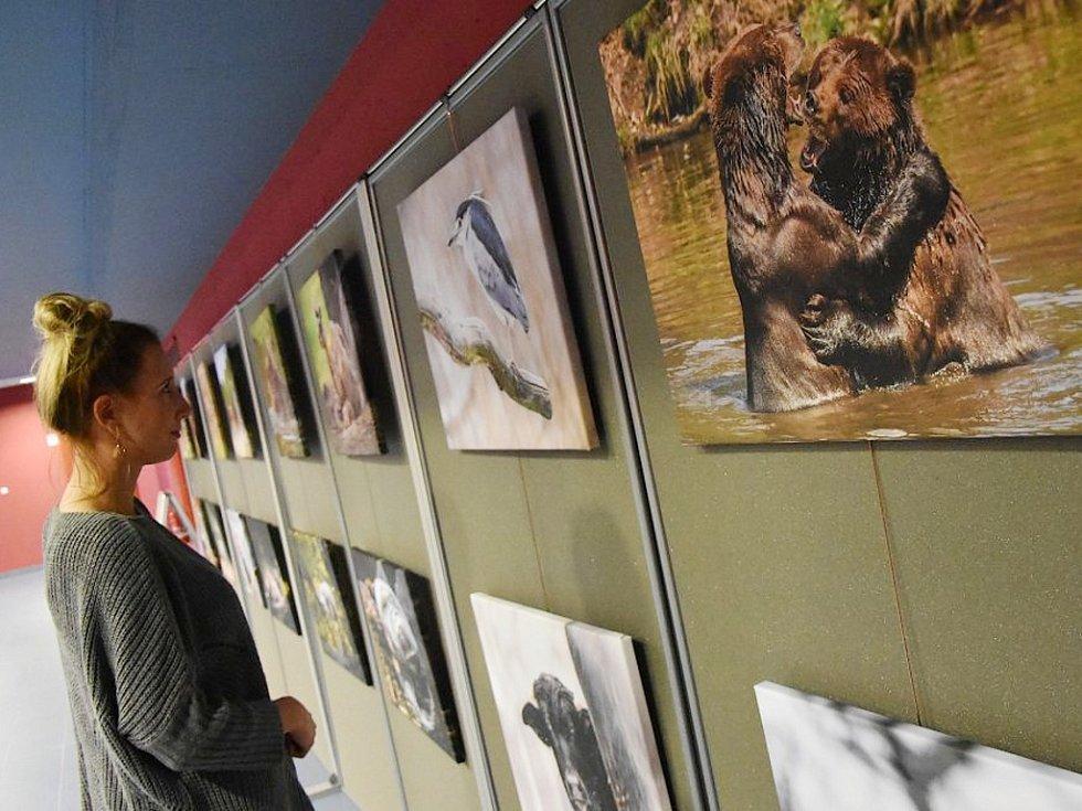 Čtrnáct snímků zobrazuje každodenní život zvířat v zooparku.
