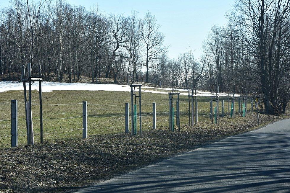 Příroda kolem Blatna je neprostupná kvůli ohradníkům firmy Zebre. Lemují je stovky nově vysázených stromů.
