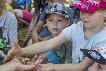SESCHLÝ LIST? NE. STRAŠILKA, která umí dokonale splynout s prostředím. Tábornici z ekotábora v chomutovském zooparku si mohli vzít zajímavý hmyz do ruky.