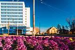 Chomutov se probouzí do jarních barev, které začínají zaplavovat město. Barevně kvetoucí květy jsou vidět po celém městě.