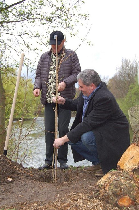 Primátorovi Danielu Černému pomohl strom zasadit i cestovatel Pavel Pavel.