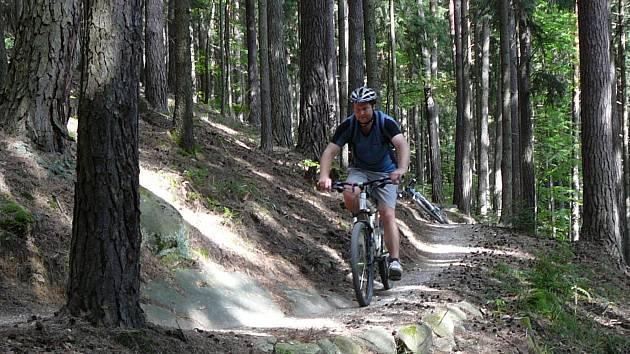 Lesní cesta. Ilustrační foto