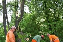 Pracovníci Správy a údržby silnic odstraňují polámané kašatny v Jirkově z cesty na Červený Hrádek.