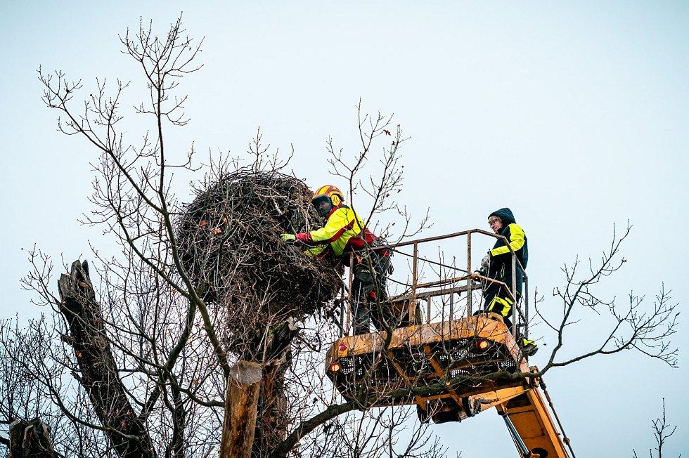 """Čapí hnízdo v Zooparku Chomutov skrývalo """"poklady""""."""