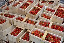 Voňavé a čerstvé jahody z letošní sklizně přivezou do Chomutova severočeští farmáři.