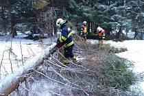 Dobrovolní hasiči z Jirkova odstraňují padlý strom v Boleboři, do kterého narazil automobil