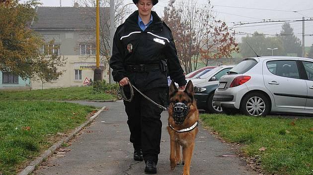Jako první před rokem vyrazila se psem do ulic Jirkova psovodka Pavla Králová, která zde působila pouhý měsíc..