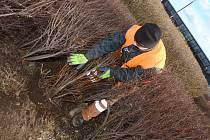 Pracovníci za dobrého počasí prořezávají keře.