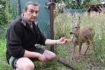 Hlavní zoolog Miroslav Brtnický se srnkou Zuzanou, která ve stanici pro handicapovaná zvířata zůstává na dožití.