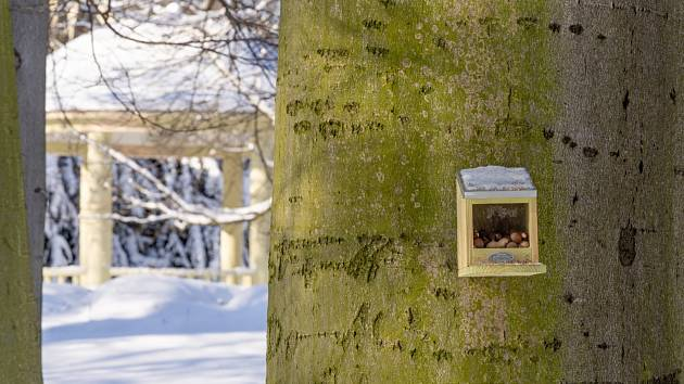 Chomutov má v městském parku speciální krmítka pro veverky.