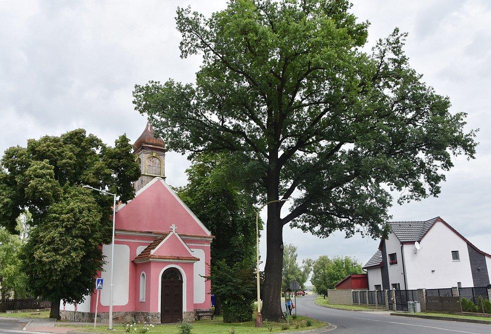 Památný dub u evangelické kaple.