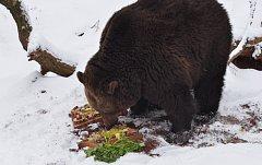 Buzení medvědů v zooparku v Chomutově.