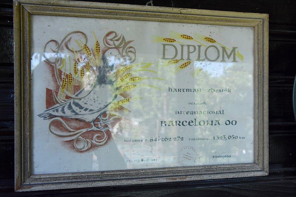 Největší rekordmankou Zdeňka Hartmana byla holubice, které zvládla let z Barcelony za 12 dní.