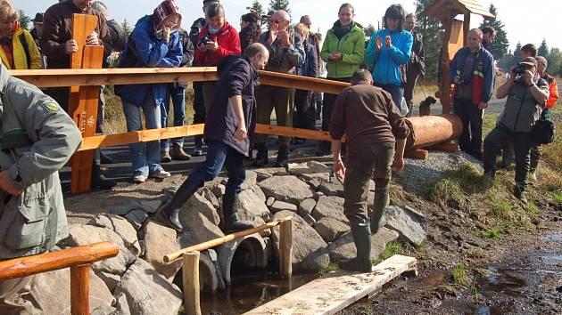 Obnovené rašeliniště u Hory Svatého Šebestiána. Ilustrační foto.