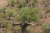 Babobab v dálce jako by napřehoval větve, aby nás obejmul.