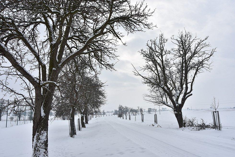 Cestu z Vrskmaně do Pesvic lemují hrušně koprčky a třešně. V posledních letech bylo kolem obce vysázeno na šest set mladých stromků, které připomínají zdejší ovocnářskou minulost.