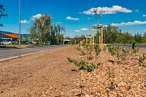 Chybějící úsek cyklostezky mezi Chomutovem a Jirkovem prochází dokončením a je tu jedna zajímavost. Podél stezky jsou vysazené staré odrůdy jabloní naroubované na vysokokmeny.