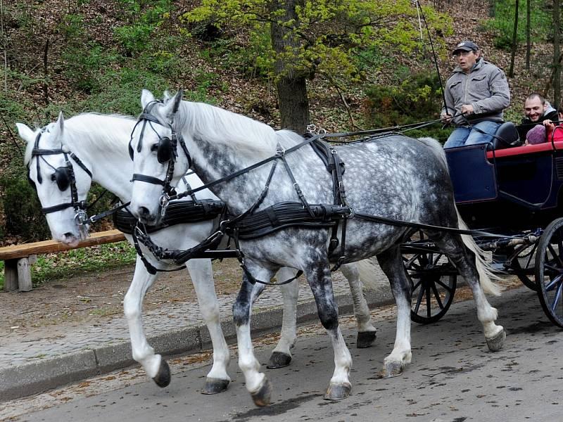 Vyjížďka v kočáře po chomutovském zooparku při oslavách Dne Země. Ilustrační foto