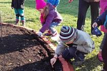 Děti z Kopretinky už vysázely cibulky tulipánů.