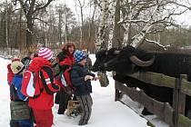 Jarní ekotábor v zooparku. Děti čeká opravdový kontakt se zvířaty, na pořadu dne bude krmení buvolů, tuleňů i domácích zvířátek.