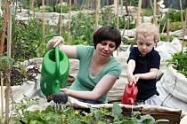 Komunitní zahrada v pražských Holešovicích. Ilustrační foto