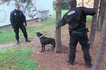 Po dobrém to nešlo, strážníci museli použít odchytovou tyč.