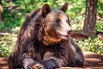 Medvědi v Zooparku Chomutov si opět užili sníh z Rocknet arény