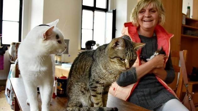 V útulku Petronella je nyní téměř 140 koček. Zařízení proto dočasně zastavilo další příjem.
