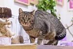 Vymazlený obr, kterému nevadí společnost koček. Zpočátku je plachý, když si ale zasloužíte jeho důvěru, zabydlí se ve vašem náručí. Trápil ho zánět dásní, který se léčí. Je vykastrovaný.