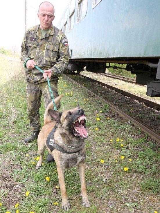 Pedrovy čelisti jsou zbraní samy o sobě. Na snímku s armádní psovodem Tomášem Procházkou.