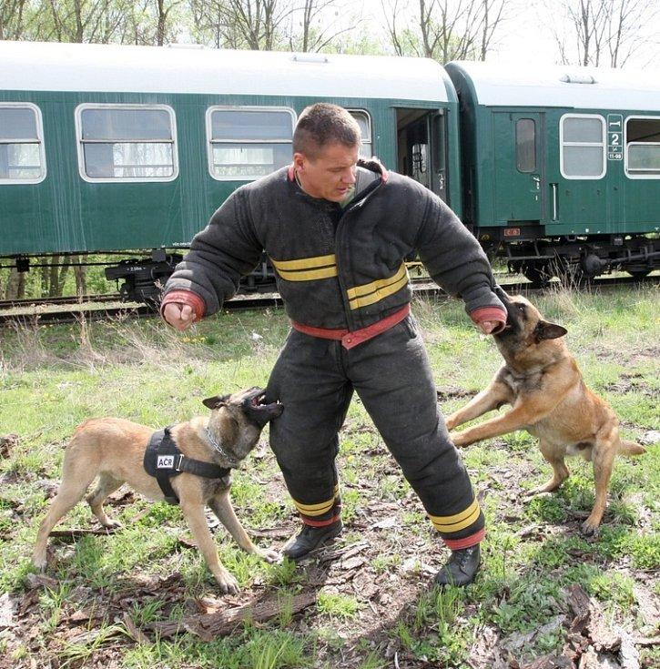 Dvojice belgických ovčáků Pedro a Floyd se připravuje na nasazení do mise KFOR.