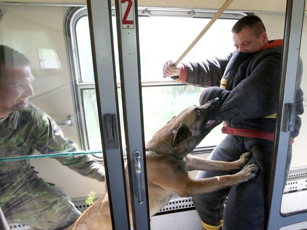"""Pes Floyd útočí na """"nepřítele""""."""