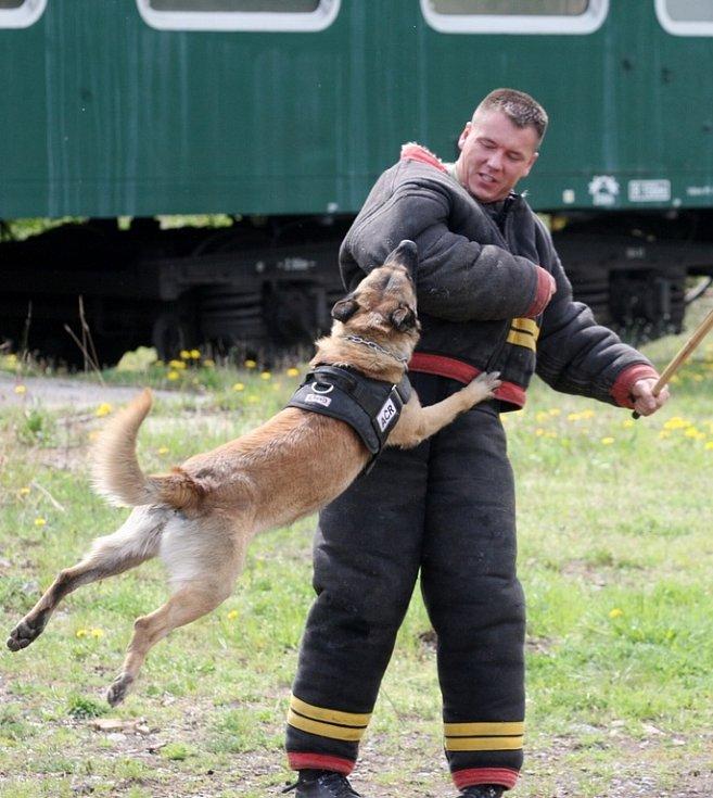 Armádní psovodi připravují v areálu železniční vlečky u Kadaňského Rohozce služební psy k nasazení do vojenských misí.
