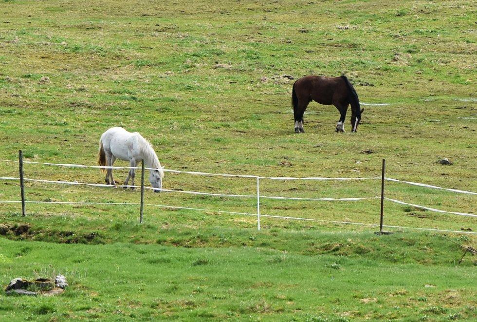 Na horských loukách v Kalku se pasou koně.