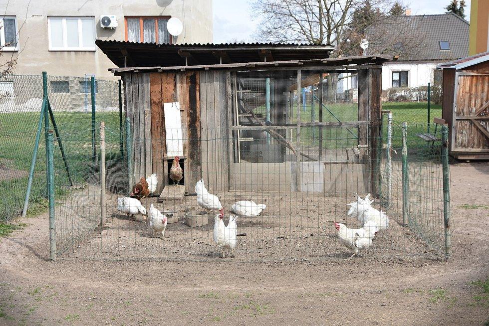 Obyvatelé činžovních domů v Nezabylicích mají k využití zahrádky. Někteří tam chovají i zvířectvo.