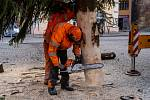 Chomutov už má vánoční strom, který zbývá ještě ozdobit. Jde o smrk, který je přibližně 40 let starý a měří cca 12m. Pochází z Městských lesů Chomutov z prostoru Hory sv. Šebestiána.