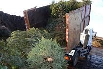 Vánoční stromky svezené technickými službami poslouží teď jako hnojivo.