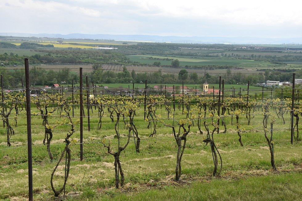 Z vinice Karla Němečka se otevírá pohled na řeku Ohře i Nechranickou přehradu. V sousedství mají své vinohrady také další dva známí místní vinaři.