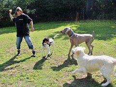 """Majitelka a současně i """"vychovatelka"""" ve psí školce Hana Kaufmanová si se svěřenci nejen hraje, ale dokáže je i cvičit a zkrotit agresivní jedince."""