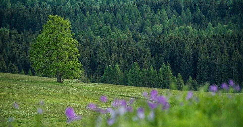 Chceme CHKO Krušné hory.