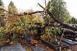 Spadlý strom na hřibtově v Chomutově