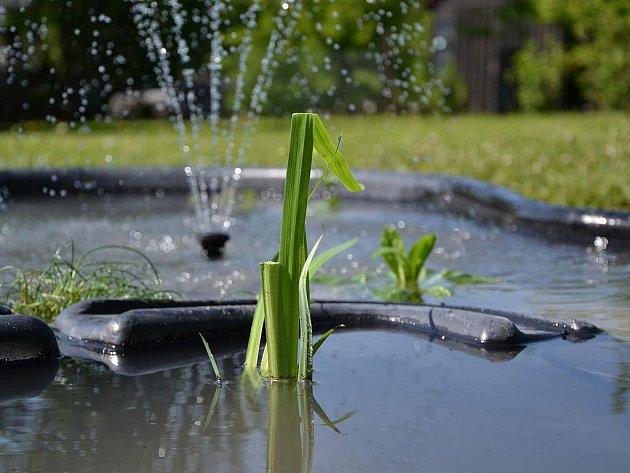 Vodní rostliny. Ilustrační foto