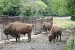 V Podkrušnohorském zooparku žije více než 160 druhů zvířat.