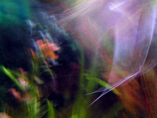 Doteky křídel - fotografie Vlasty Fišrové