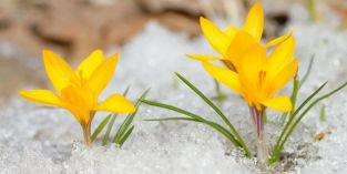 Zahradničení v únoru – přesazování pokojovek, ochrana i prořezání stromů