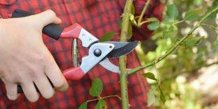 Vybíráme zahradnické nůžky: které se hodí pro vaši zahradu?